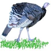 turkey-gleneyrie-lah