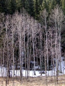 aspen-grove-rampartrangerd-2009-03-01-lah-558