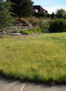 buffalo-grass-lawn-xg-9aug05-lah-210
