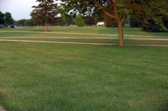 Lawn_UplandIN_20090615_LAH_3607