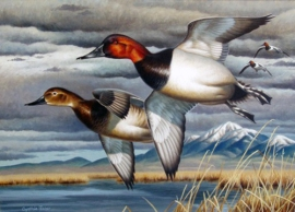 2003 CO Duck Stamp c Cynthie Fisher