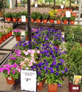 plants-for-sale-lowes-cs_2008aug02_lah_5106-1