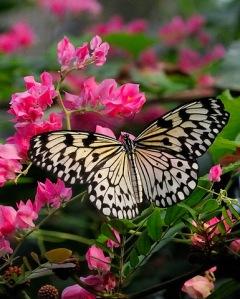 paper-kite_butterflypavco_20100123_lah_7745