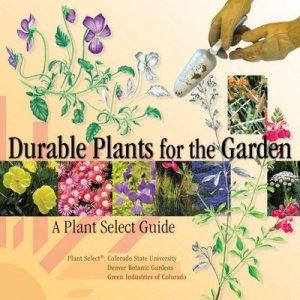 durable-plants