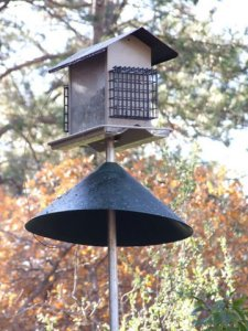 squirrel-baffle-lah-041-1