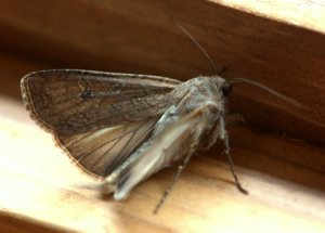 miller-moth_blkforest-co_lah_3339
