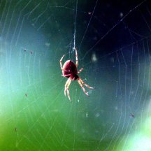 spider_browns-tacoma_20091016_lah_4079