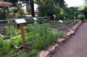 vegetable-garden_has-cospgsco_lah_0304