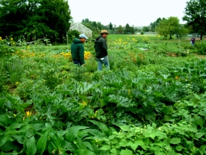 veggie-garden-student-run-csu-perc-lah-094-1