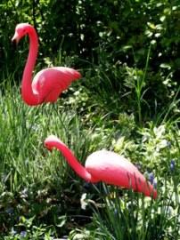 flamingos-boulder-20070503-lah-261