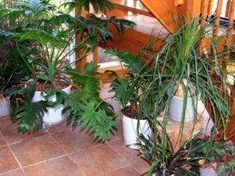 houseplants-blackforestco-2008aug02-lah-130