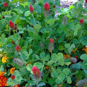 red-clover-home-2008sept23-lah-282