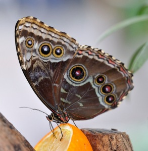 _butterflypavco_20100123_lah_7512-1