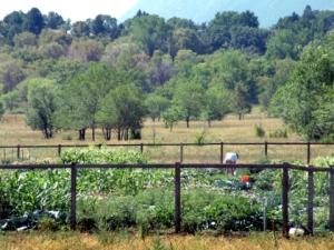 community-gardens-bearcreek-lah-003