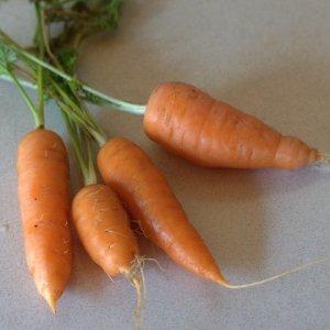 carrots_home_20091103_lah_5355-1