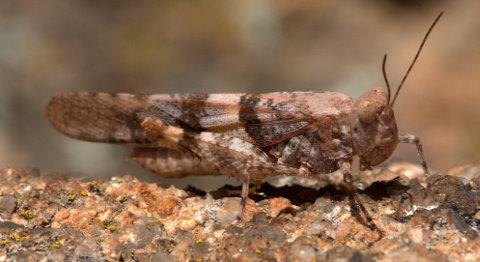 grasshopper_castlewoodcyn-co_lah_8521