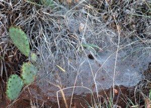 grass-spider-web_aikencyn-co_lah_8755