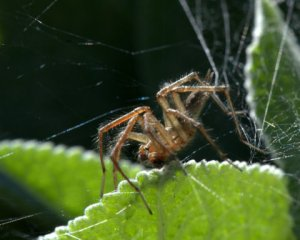 grass-spider_dbg-co_lah_8972