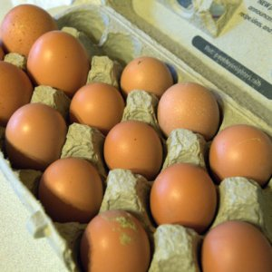 pullet-eggs_lah_2165