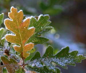 rime-ice_blkforest_20091012_lah_3992-1