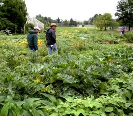 veggie-garden-student-run-csu-perc-lah-094-nx-1