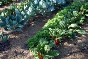 veggie-rows-dianapicchietti-monument-22july05-lah-025r