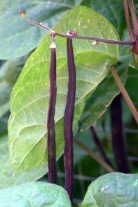 tyndale-garden-colospgs-co_lah_2861