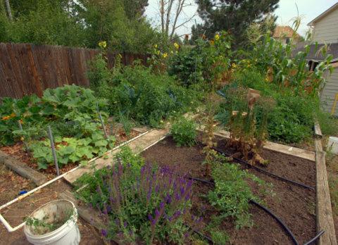 tyndale-garden-colospgs-co_lah_2870