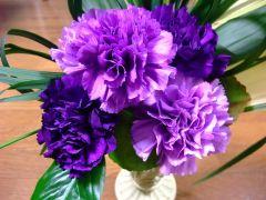Carnation 'Moondust' - wikicommons