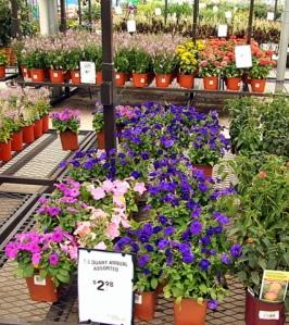 Plants for sale @Lowe's-CS_2008aug02_LAH_5106