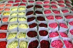 rose_bundles