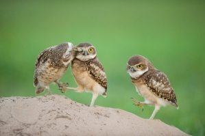 the handbook of bird photography - bence mate