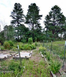 Weedy garden_LAH_7229-001