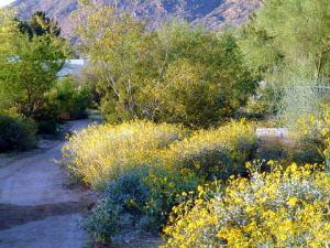 @Scottsdale 2004apr16 LAH 017