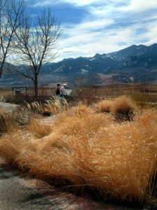 Winter landscape with grasses @XG LAH 002