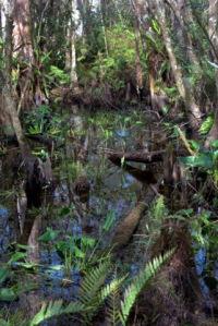CorkscrewSwampSanctuary-FL_LAH_6227