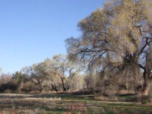 Cottonwoods_Cornville-AZ_AH 644