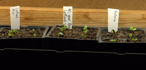 Seed trays_LAH_9674