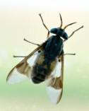 Fly_BitterLakeNWR-NM_LAH_8000-001