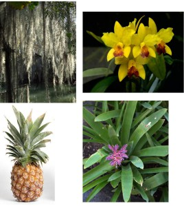 bromeliad quiz group