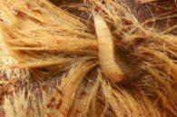 blow-fly-larva TAMU-edu