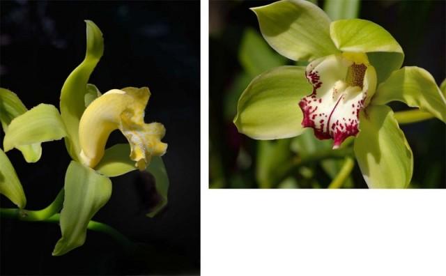 orchids-001