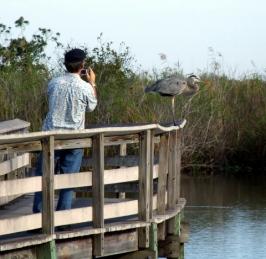 Pete photo of YCNH @EvergladesNP 31dec07 LAH 751