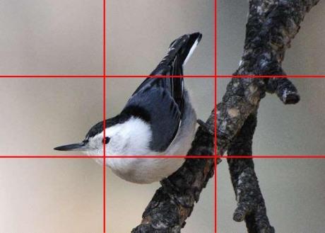 White-breasted Nuthatch_KiowaCreekRanch-N ElPasoCo-CO_LAH_3634-5x7