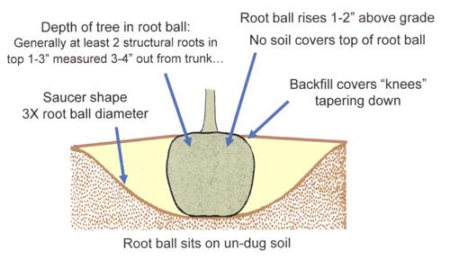 csu tree planting summary