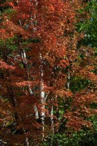 Fall foliage_DenverZoo_20091007_LAH_3723