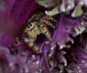 Spider_HudsonGardens-CO_LAH_6017