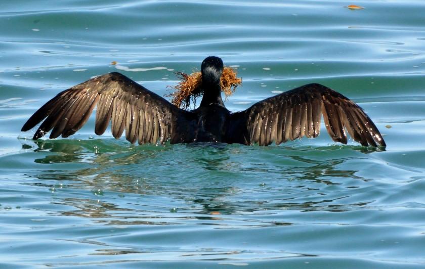 MontereyPier-CA_LAH_9662
