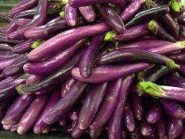 Eggplant_LAH_0532