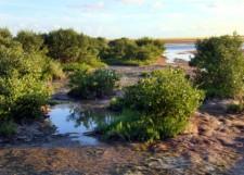 SnakeBightOverlook@EvergladesNP 2007dec31 LAH 008